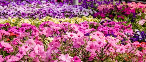 Spring Flowers Country Basket Niagara