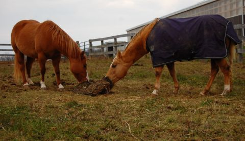 Horses Love Our Slow Feed Netting