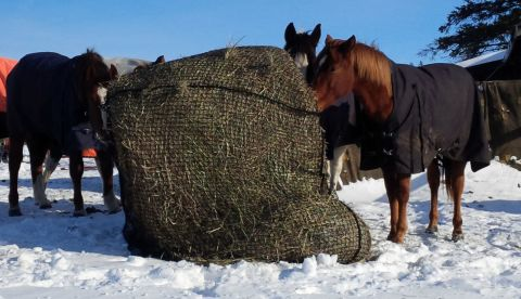Horses Eating from Slow Feed Round Bale Net