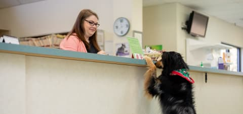 Clemmons Veterinary Care