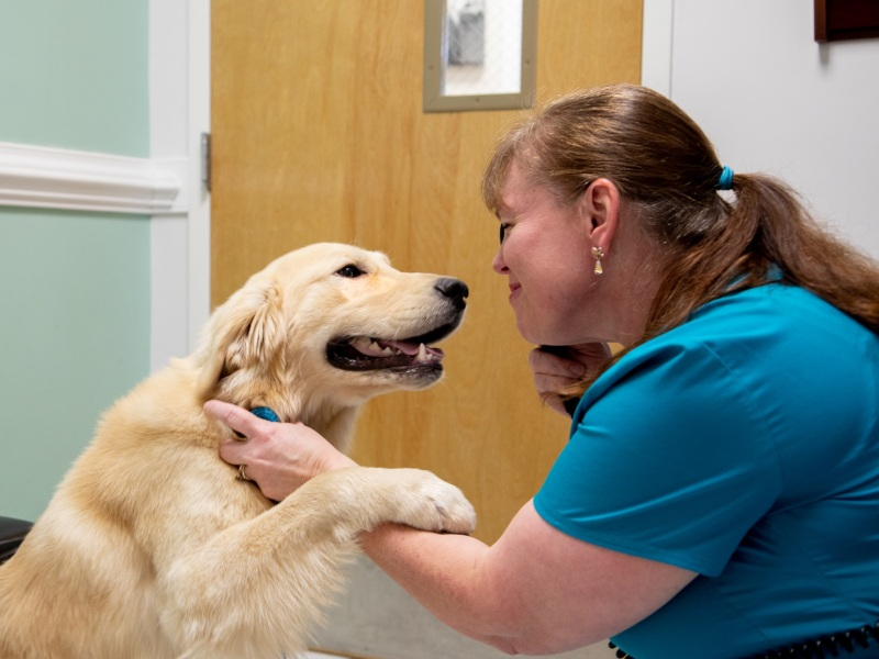 Veterinary care with a gentle touch for pets in Huntersville.