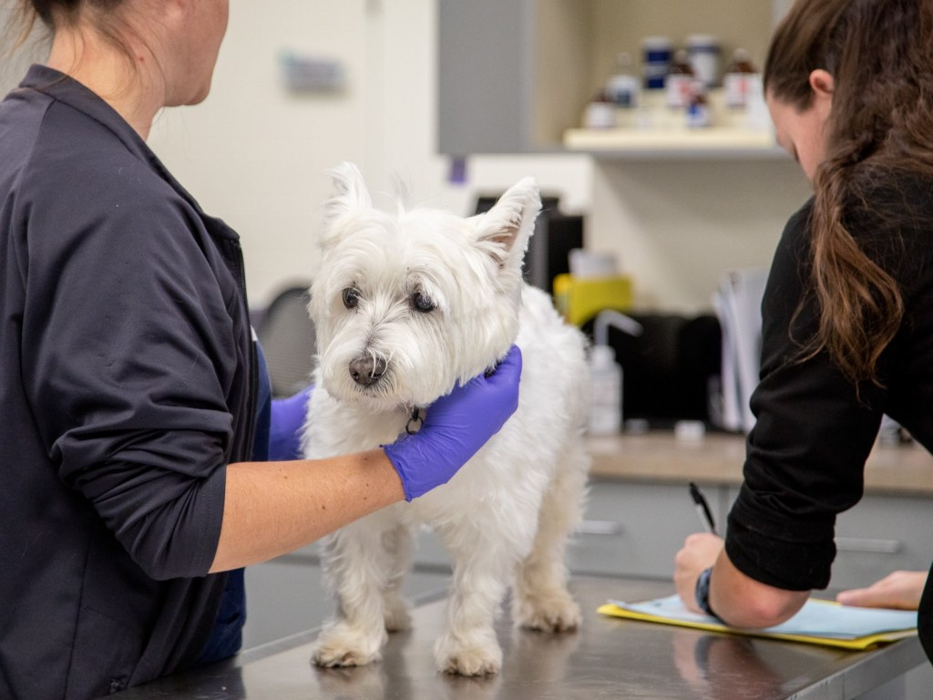 Specialty & Emergency Veterinary Care, Charlotte