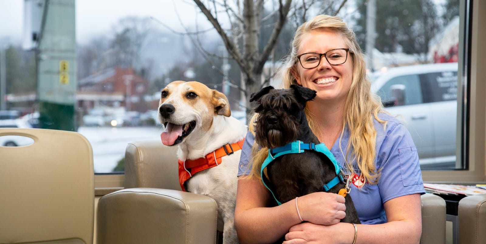 Compassionate Veterinary Care in Asheville