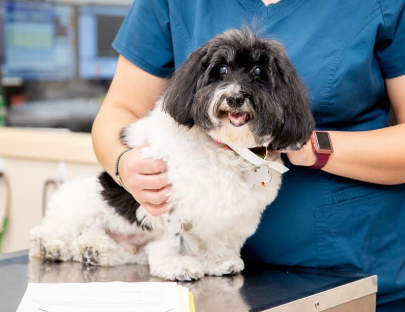 Veterinary Specialists in Plains