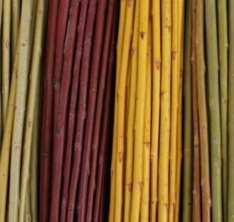 Willow Varieties
